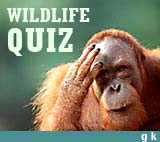 General Knowledge Questions on Animals